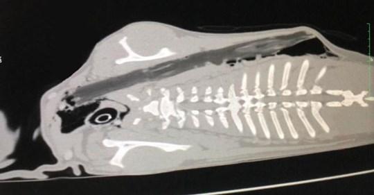 Tierklinik rüttelt mit Schockbildern wach: Dieses Spiel kann Ihren Hund umbringen!