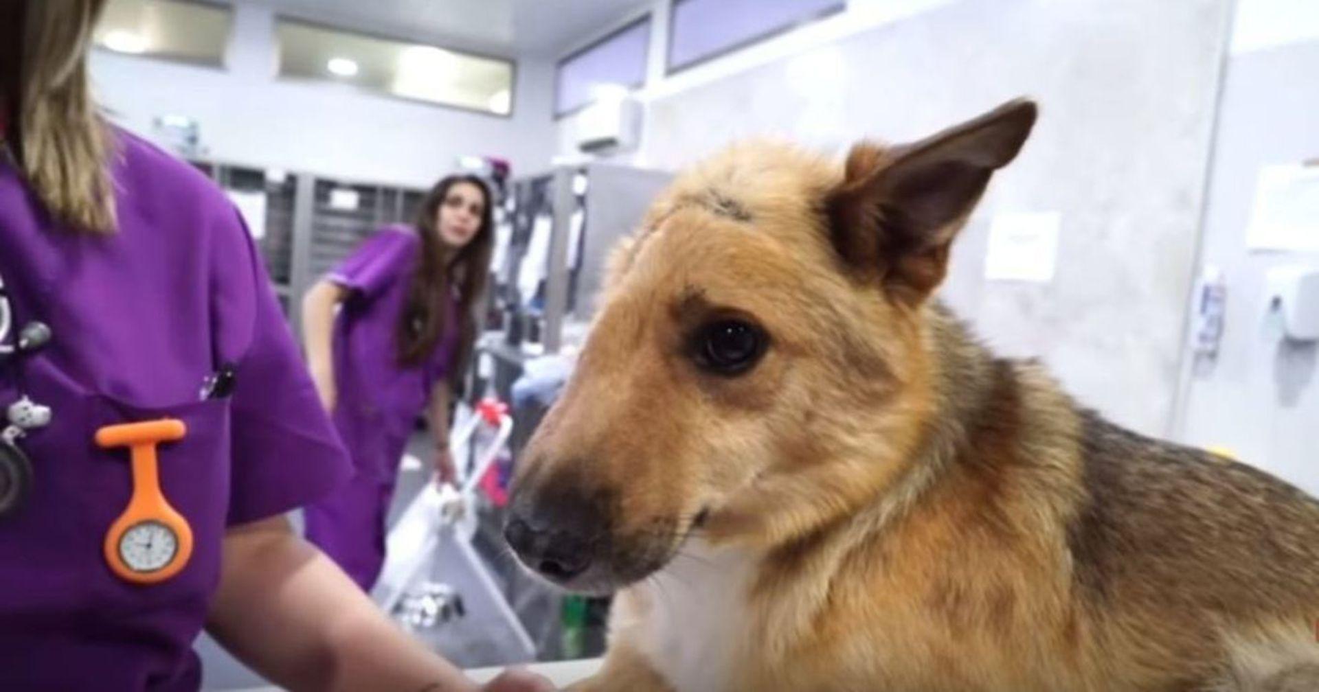 Hund mit halbem Gesicht: Gänsehaut Video zeigt seinen Überlebenswillen!