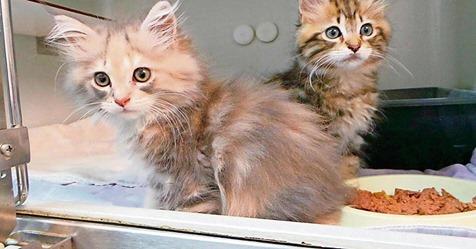 Wären qualvoll gestorben: Fünf Katzenbabys bei Wonsees ausgesetzt