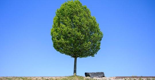 Aktion Einheitsbuddeln: Am 3. Oktober soll jeder Deutsche einen Baum pflanzen