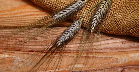 Urgetreide versus Weizen – was ist gesünder?
