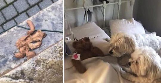 Papa rettet den geliebten Teddybären des Hundes, nachdem er bei einem Sturm draußen gelassen wurde