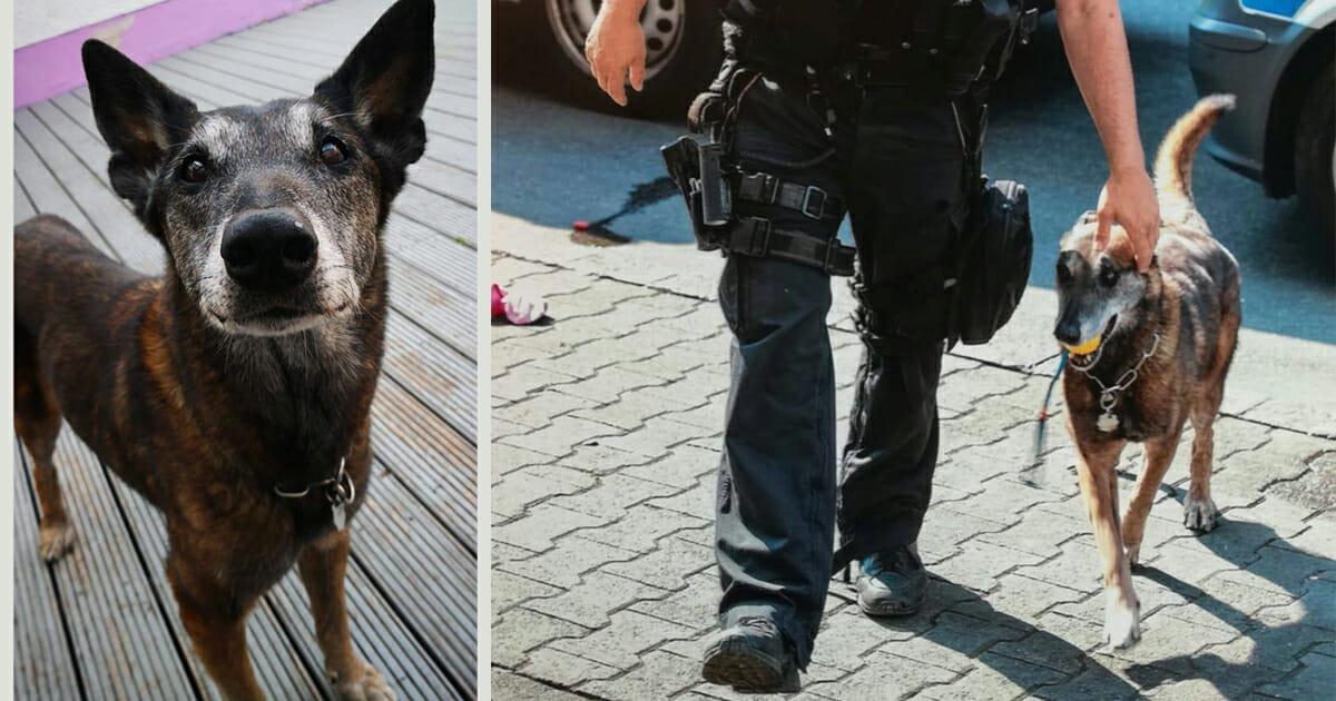 Frankfurt a. M.: Polizei trauert um Diensthündin Ginger – Nach 12 Jahren im Einsatz