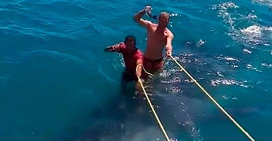 """Tourist """"surft"""" auf Walhai"""