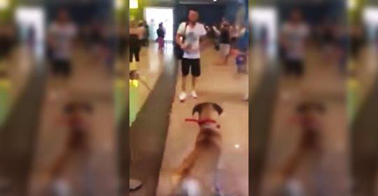 Hund starrt seinen Besitzer an, nachdem sie drei Jahre getrennt waren, bevor er realisiert, dass es eine glückliche Wiedervereinigung ist