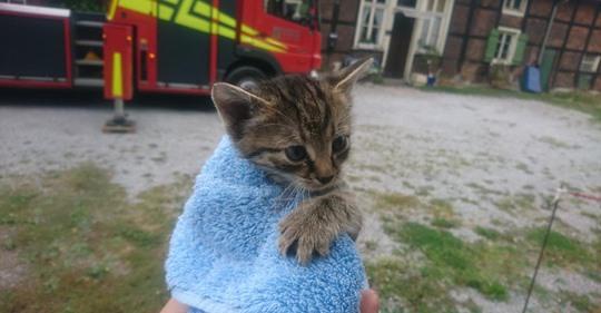 ES DROHTE IN DIE TIEFE ZU STÜRZEN Kleines Kätzchen vom Dach gerettet