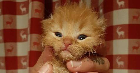 Sie finden ein Kätzchen. Seine Pfötchen zeigen, wie abartig der Mensch sein kann!