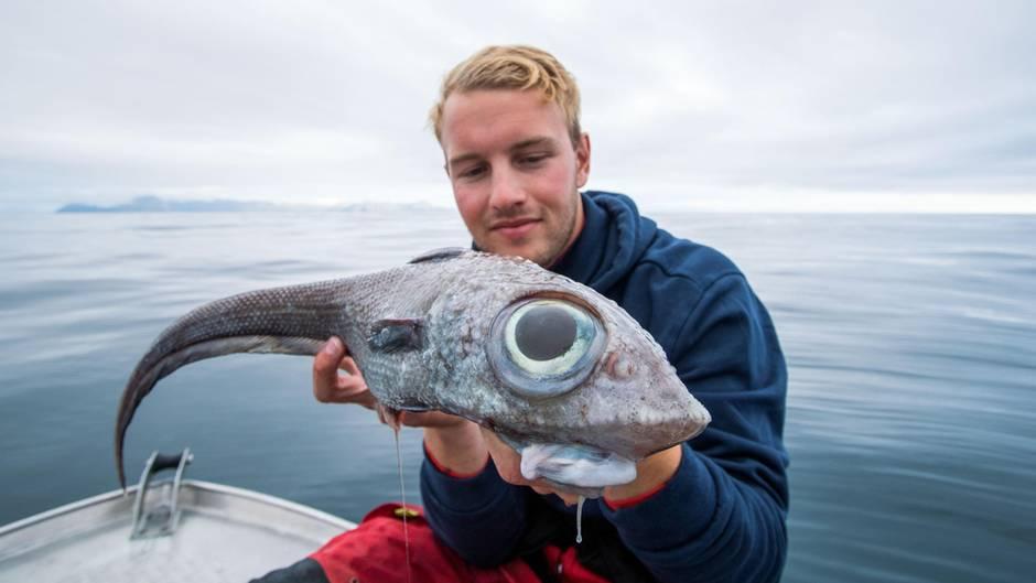 Norwegischer Fischer kriegt Riesenschreck, als er seine Angel aus 800 Metern Tiefe einholt