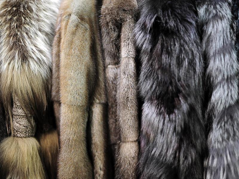 USA: Kalifornien verbietet als erster Bundesstaat den Verkauf und die Produktion von neuen Pelzen