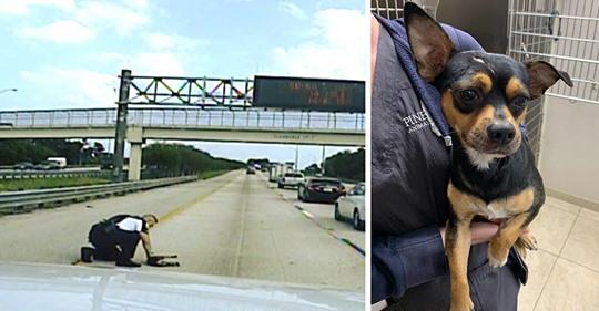 Hund auf Autobahn angefahren – Polizist trägt verletzten Vierbeiner von der Fahrbahn