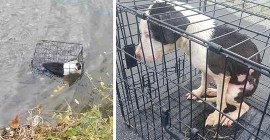 Angler entdeckt kleine Hündin, die in einem Käfig eingesperrt in See trieb – rettet sie in letzter Sekunde