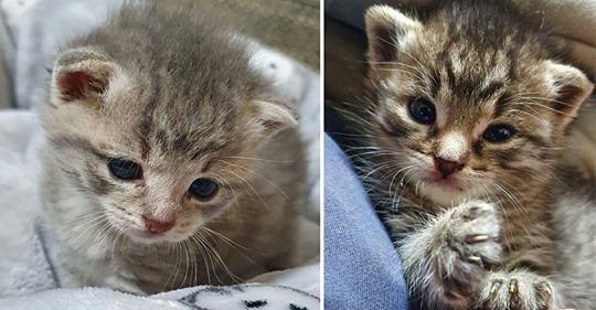 Drei Katzenbabys im Misthaufen entsorgt