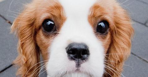 UNDESTEUER STEIGT AB 2020 Stadt bittet Hundebesitzer zur Kasse