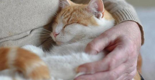 In Indien: Mann steckt trächtige Katze in Trockner   jetzt muss er lang ins Gefängnis