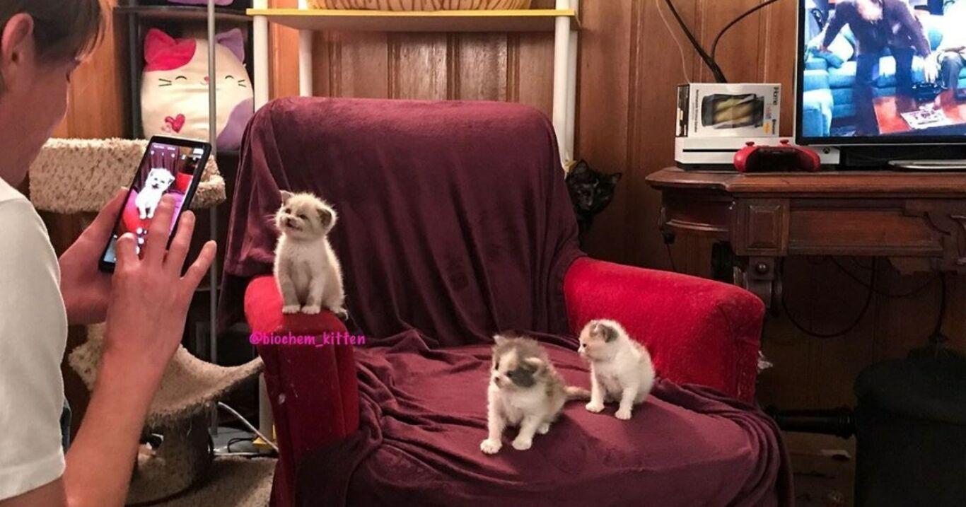 Sie fotografiert ein gerettetes Kätzchen: Der Schnappschuss erobert das Internet im Sturm!