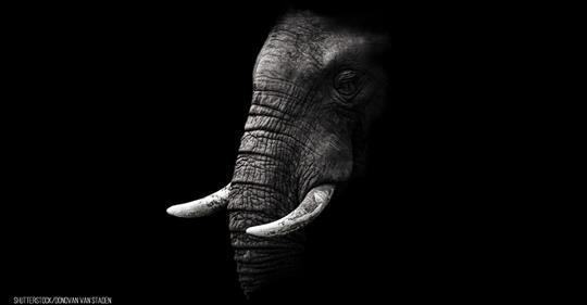 Elefant reißt sich Rüsselspitze in Zoogehege-Tor ab
