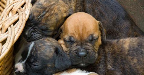 Ausgesetzt in der Kälte: Hundemutter mit Welpen an Tor gekettet