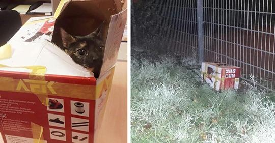 Katze in Karton eingesperrt und über Zaun geworfen – Lag stundenlang in der kalten Nacht