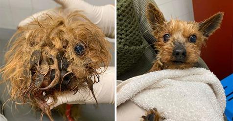 Tierschützer befreien verwahrloste Hunde und Katzen aus qualvollen Bedingungen
