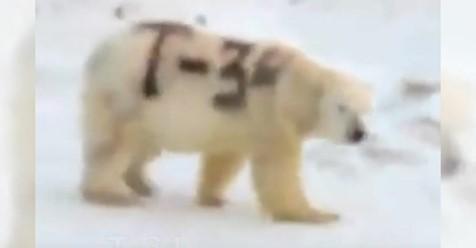 Eisbär wird von Unbekannten mit schwarzer Farbe besprüht – könnte Auswirkungen auf sein Überleben haben.
