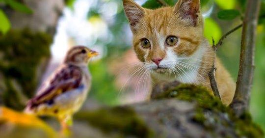 Verstoß gegen EU Recht? Juristen wollen Hauskatzen den Freigang verbieten