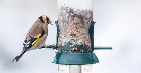 Vögel füttern im Winter: Das sollten Sie wissen