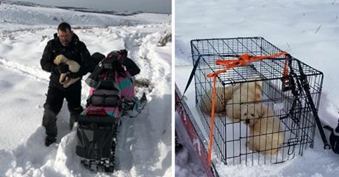 Paar macht Ausflug durch Neuschnee – rettet rechtzeitig drei zurückgelassene Welpen vor dem Kältetod