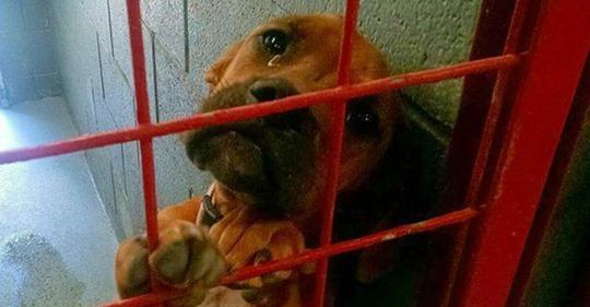 Tierheimhund weint nächtelang & muss bald eingeschläfert werden, wenn sich kein neues Zuhause findet