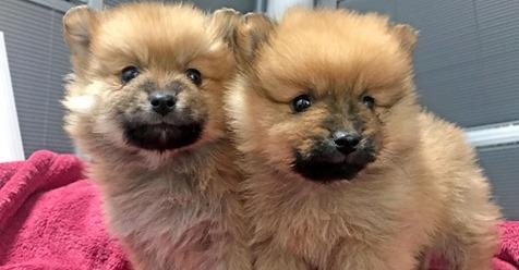 Miese Masche mit süßen Hundewelpen