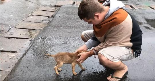 Streunender Welpe wedelt um Aufmerksamkeit zu erregen mit dem Schwanz, wenn Leute vorbeigehen