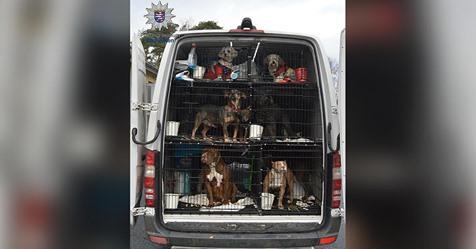 Trauriger Fund bei Kontrolle   Autobahnpolizei befreit 30 Tiere aus Kleintransporter