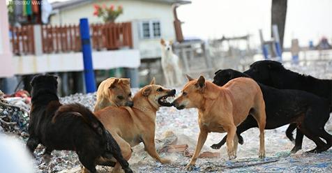 Straßenhunde beißen Neugeborenes in OP Saal tot – Klinik bietet Eltern Schweigegeld an