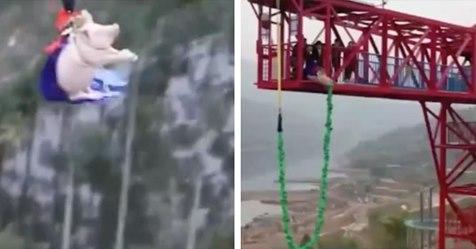 Freizeitpark-Mitarbeiter werfen Schwein für Eröffnung aus 70 Metern an Seil in die Tiefe