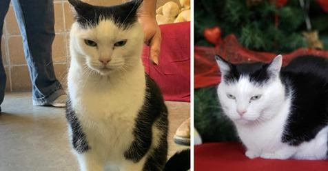 """Tierheim-Mitarbeiter dachten, Katze ist krank, weil sie so herzlos ist – laut Tierarzt """"einfach ein Arsch"""""""