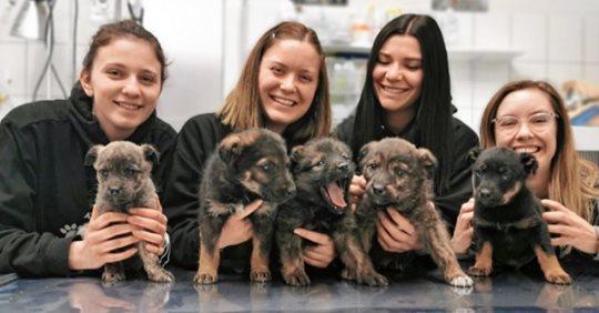 6 hilflose Hundebabys bei Eiseskälte ausgesetzt