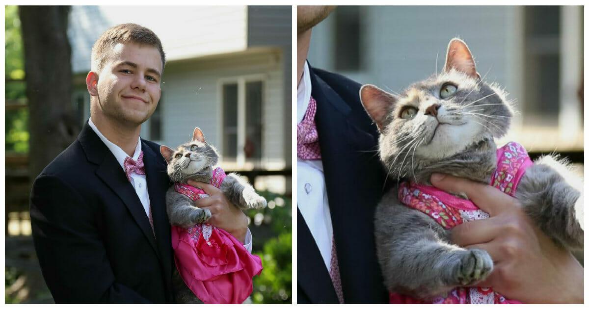 Schüler fand keine Abschlussball-Begleitung, also nimmt er seine wahre Liebe – seine Katze