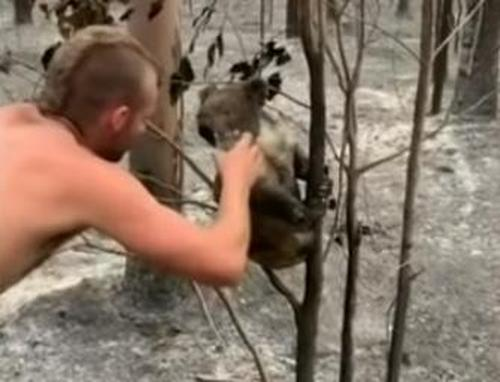 Australischer Jäger rettet neun Koalas während gefährlicher Mission in ausgebrannter Gegend