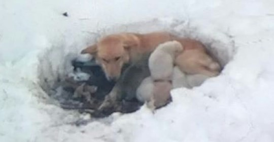 Mitten im Schnee ausgesetzt: Hundemama & ihre sechs Welpen vor Erfrieren gerettet