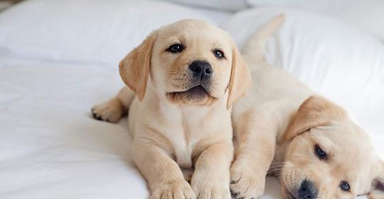 Das sind die schönsten Hundenamen 2020