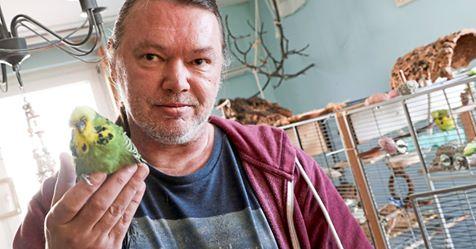GELSENKIRCHENER PÄPPELT 29 VÖGEL IN SEINER WOHNUNG AUF Neues Nest für diesen Nackt-Sittich