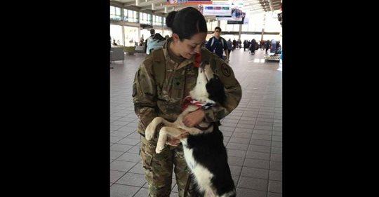 Hündin kann beim Anblick der Soldatenmutter, die vom Einsatz zurückkehrt, ihre Freude nicht zügeln
