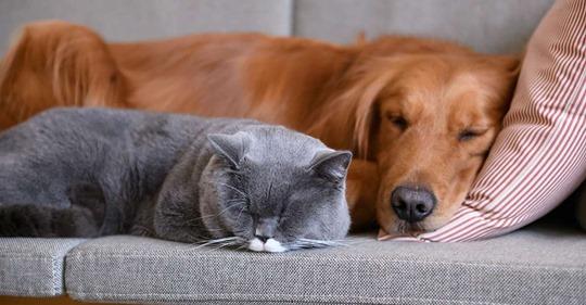 Corona: Das müssen Haustierbesitzer jetzt wissen