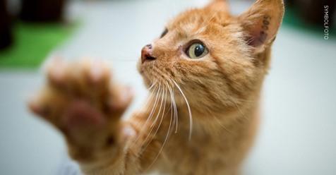 Katze sendet SOS-Signal und löst Polizeieinsatz aus