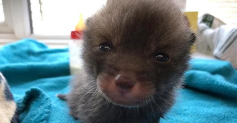 Tierheim nimmt Babykatze auf – doch die ist gar keine Katze