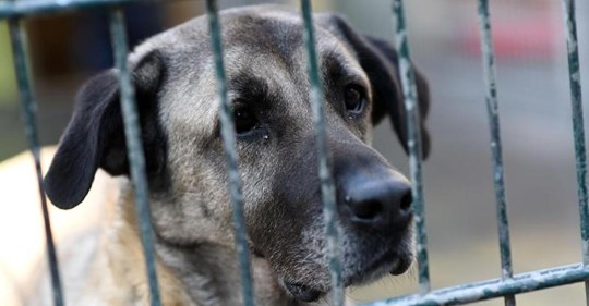 Gerichtsvollzieher pfänden Hunde und verkaufen sie für 2,50 Euro im Internet