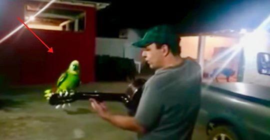 Mann fängt an, Gitarre zu spielen und sein Papagei stimmt mit ein