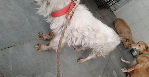 Grausame Tierquälerei: Mann bindet Hund an Fahrzeug und schleift ihn bei voller Fahrt mit