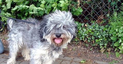 Verwahrloster Hund vor Tierheim in Sachsen ausgesetzt   es wird um Hinweise gebeten