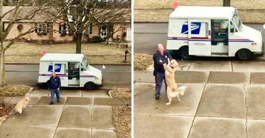 Hund wartet jeden Tag draußen, um seinen Briefträger zu begrüßen