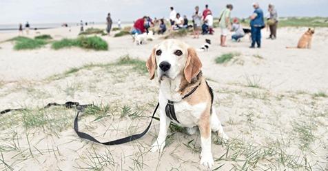 SCHLUSS MIT WUFFIG Hunde-Verbot am Hunde-Strand